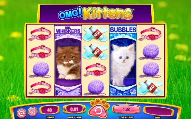 WMS OMG! kittens