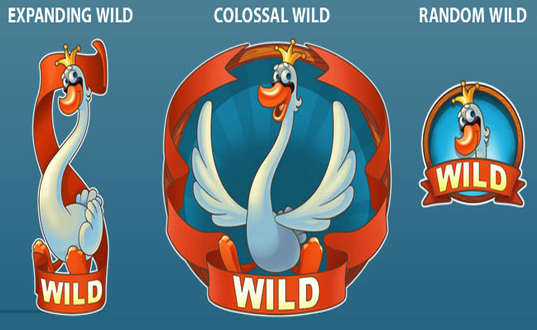 Scruffy Duck wild