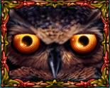 Owl Eyes Wild